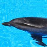 沖縄でイルカと泳げるホテルまとめ