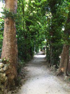 備瀬のフクギ並木はトトロの森のよう