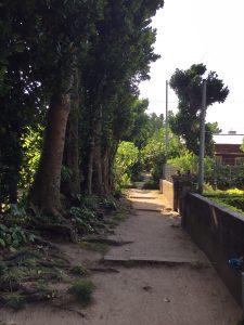 フクギ並木にある集落の様子